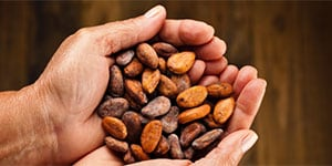 Cocoa Beans and Almonds for Chocolate Bar